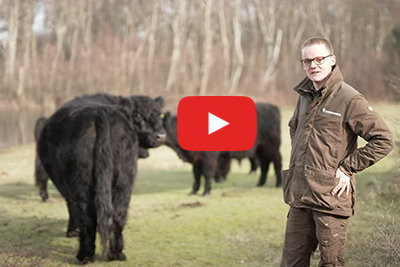 Filmpje: grote grazers