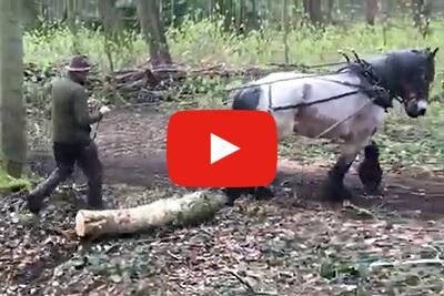 Trekpaarden in actie