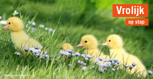 Vijf prachtige lenterondjes