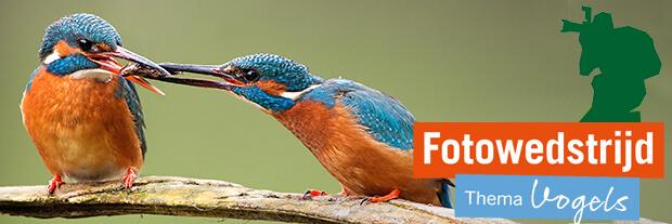 Fotowedstrijd Vogels